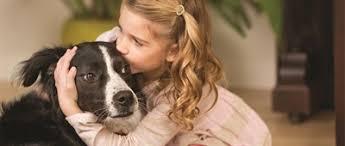 Der cottbusser postkutscher putzt den cottbusser postkutschkasten. Umgang Mit Epileptischen Anfallen Beim Hund Mein Hund Hat Epilepsie