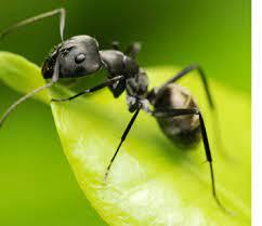 Organic Pest Control - Patriot Pest Solutions