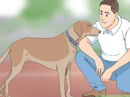 How To Determine If Your Dog Is Obese 13 Steps With Pictures