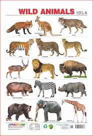 wild animals chart. Simple Animals Amazonin Buy Spectrum Educational Wall Chart TwoInOne   Domestic  Animals U0026 Wild  Book Online At Low Prices In India   Throughout T