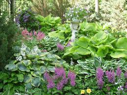 Small Picture 124 best Hostas images on Pinterest Shade plants Hosta gardens