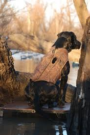 Avery Boaters Dog Parka Buckbrush Dogs Unlimited
