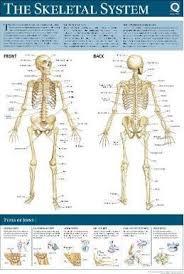 Wall Chart Of Human Anatomy Human Anatomy Wallchart Quad Books 9780857624772