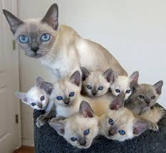 cats and kittens pictures.  Kittens Catandminimecounterpart51__700 In Cats And Kittens Pictures