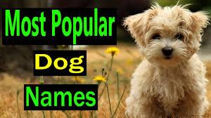 top 25 dog names