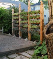 need backyard privacy ideas diy garden privacy screens