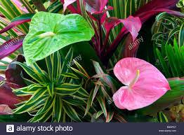 tropical flower arrangement anthurium flowers and tropical foliage kauai hawaii