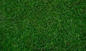 grass texture hd. Beautiful Texture And Grass Texture Hd
