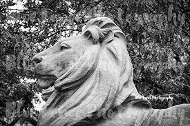 Famous architectural photography City Architecture New York Public Library Lion Closeup 42nd Street Architectural Photography Black White New York City Ny Print Manhattan Wall Art Sizes Available Amazoncom New York Public Library Lion Closeup 42nd Street