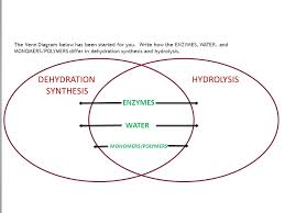 Comparison Venn Diagram Venn Diagram Comparing Hydrolysis And Dehydration Synthesis