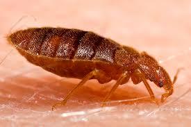 Kleine Schwarze Käfer Ungeziefer Ratgeber