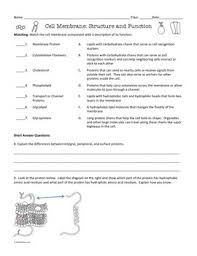 Human Cell coloring page   Free Printable Coloring Pages as well  together with  furthermore Biology   Animal Cell coloring together with Plant Cell Coloring Page Best Of   itgod me likewise surface area to volume ratio cells worksheet   Google Search as well mon Worksheets   cell membrane structure and function worksheet also Best Pretty Cell Membrane Coloring Worksheet Answer Key Pages Free as well Animal Cell Coloring Worksheet Pdf   Coloring Pages Ideas also Factor Trees Worksheet add fractions with unlike denominators besides . on cell memne coloring worksheet answers