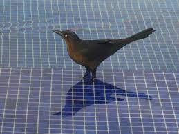 Bird in the pool - Picture of Hotel Casa Dona Susana, Puerto Vallarta -  Tripadvisor