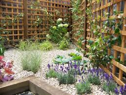Southern California Gardening Plants For Dry Shady AreasClimbing Plant For Shade