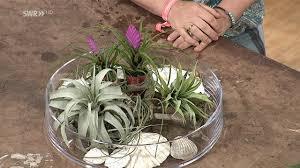 Pflanzen Fürs Badezimmer Garten Kaffee Oder Tee Swrde