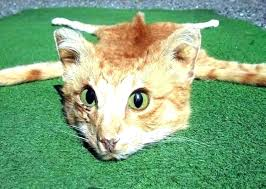 animal skin rugs animal skin rugs hide the bizarre cat rug has gotten nearly views since animal skin rugs