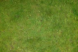 grass texture hd. Download Texture Grass Hd