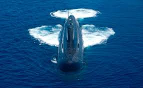 ins china the china factor why indias once secret sub will join war games today