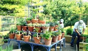herb garden plant stands stand indoor kitchen garde