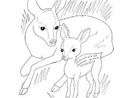 Coloring Pages Of Wild Animals Homelandsecuritynews