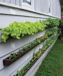 wonderful decoration small vegetable garden ideas get started growing 5 easy to try