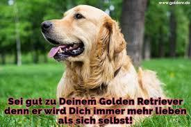 Golden Retriever Zitate Und Sprüche