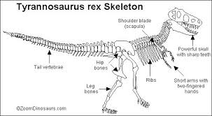 Small Picture T rex Skeleton Printout ZoomDinosaurscom