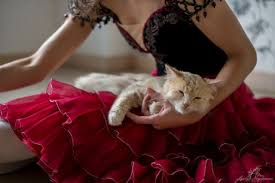 Картинки по запросу кот и балет