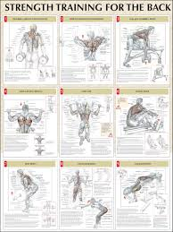 Back Workout Chart Step By Step Back Workouts Health And Fitness Training