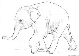 Baby Elephant Drawings How To Draw A Baby Elephant Step By Step Drawing Tutorials