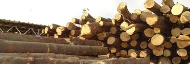 Best Firewood To Burn Chart Different Types Of Wood For Burning And Their