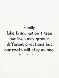 Quotes About The Importance Of Family Delectable Family Quotes Family Sayings Family Picture Quotes