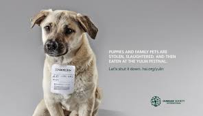 humane society ads. Beautiful Ads Humane_society_adpeanut On Humane Society Ads O