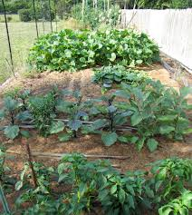 Small Picture Vegetables CCE Suffolk Long Island Gardening