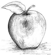 apple fruit black and white. apple black and white sketch fruit m