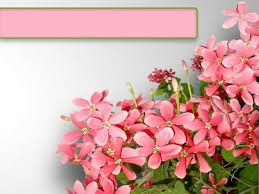 Ppt Flowers Pink Flowers Flowers Ppt Slide Template Ppt