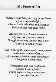 Loss Of Pet Quotes Custom Loss Of A Pet Quotes Google Search Good Thoughts Pinterest