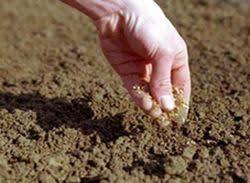Влияние хозяйственной деятельности человека на состояние почвы  Влияние хозяйственной деятельности человека на состояние почвы