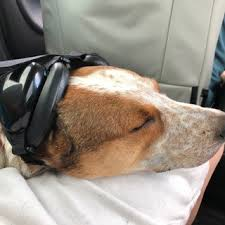 Mutt Muffs Dog Hearing Protection