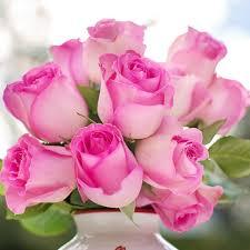 Pink roses - Rózsaszín rózsák - Megaport Media