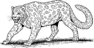 Small Picture Snow Leopard Coloring Pages Printable Coloring Coloring Pages