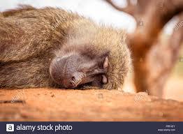 Hairy cub pics asleep