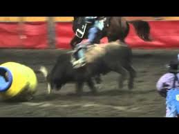 rodeo bull charging. Modren Rodeo Bad Ass Bull Charging At The Barrel With Rodeo Clown Inside For Rodeo Charging O