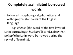 assimilation of borrowings ppt video online  completely assimilated borrowed words