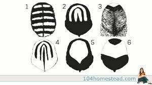 feather patterns feather patterns comb styles of chickens