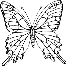 Successful Butterfly Outlines To Color Free Pr 10667 Unknown