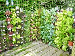 container gardening vegetables. creative recycled bottle plastic for container gardening vegetables and herbs mounted on the wire fence with exposed block tiles