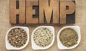 Cannabis sativa: Hemp Seed Oil vs CBD for the Skin – Earth to Kathy