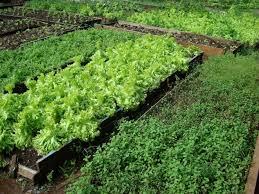 Resultado de imagem para hortaliças