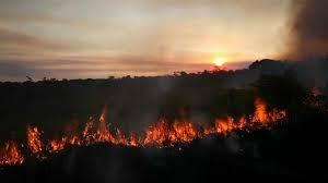 El Reino Plantae arde en llamas